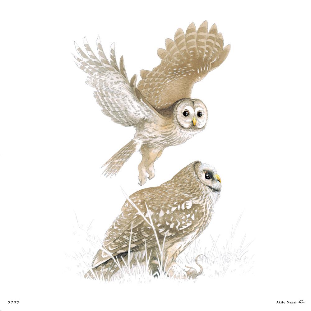 永井明人森のガードマン(フクロウと仲間達)フクロウ