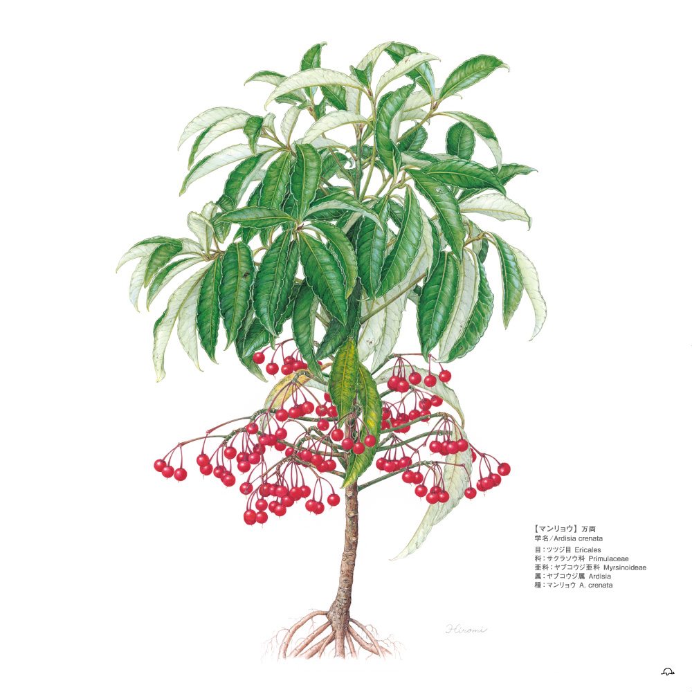 鳥居ひろみボタニカルアート─町角の植物図鑑マンリョウ