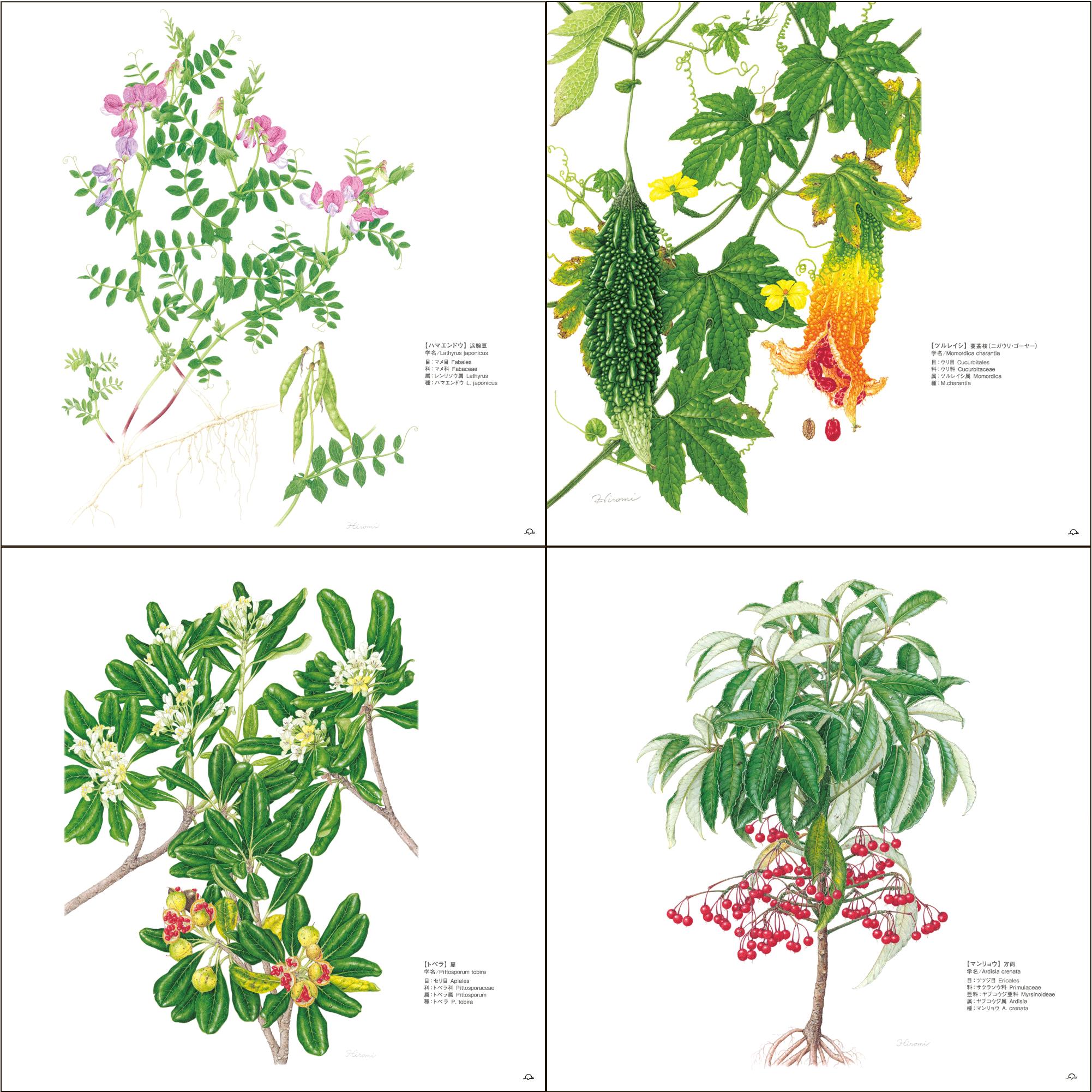 鳥居ひろみボタニカルアート─町角の植物図鑑