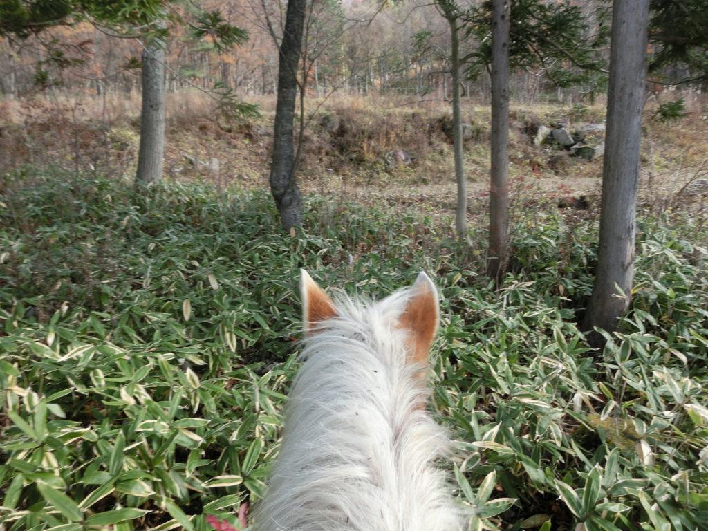 11月乗馬