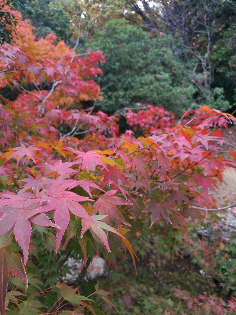 浜松城紅葉まつり