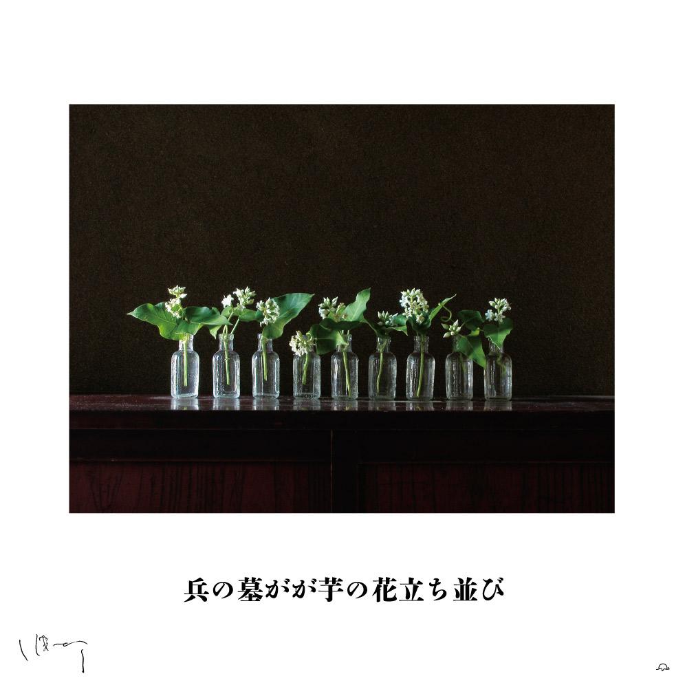 味岡伸太郎花頌抄2 8月(芋の花)