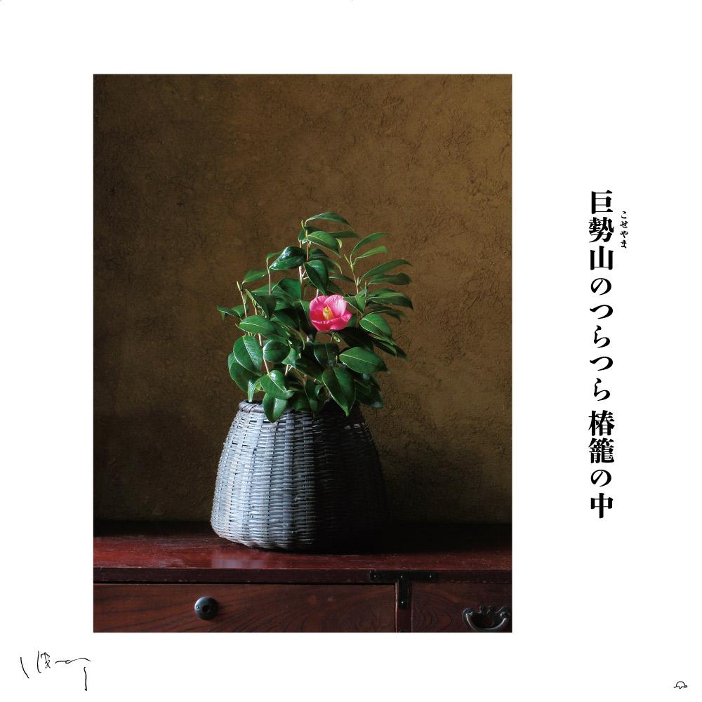 味岡伸太郎花頌抄3(12月椿 )