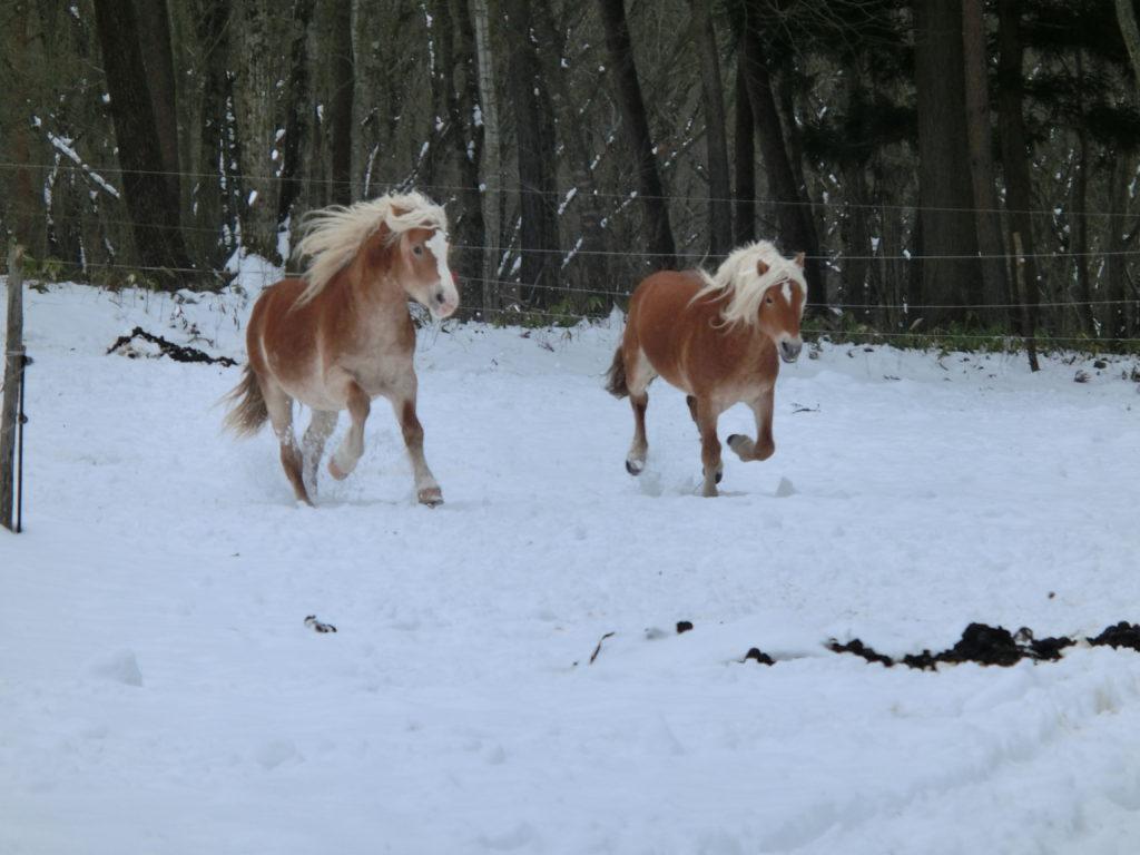 雪を駆ける馬