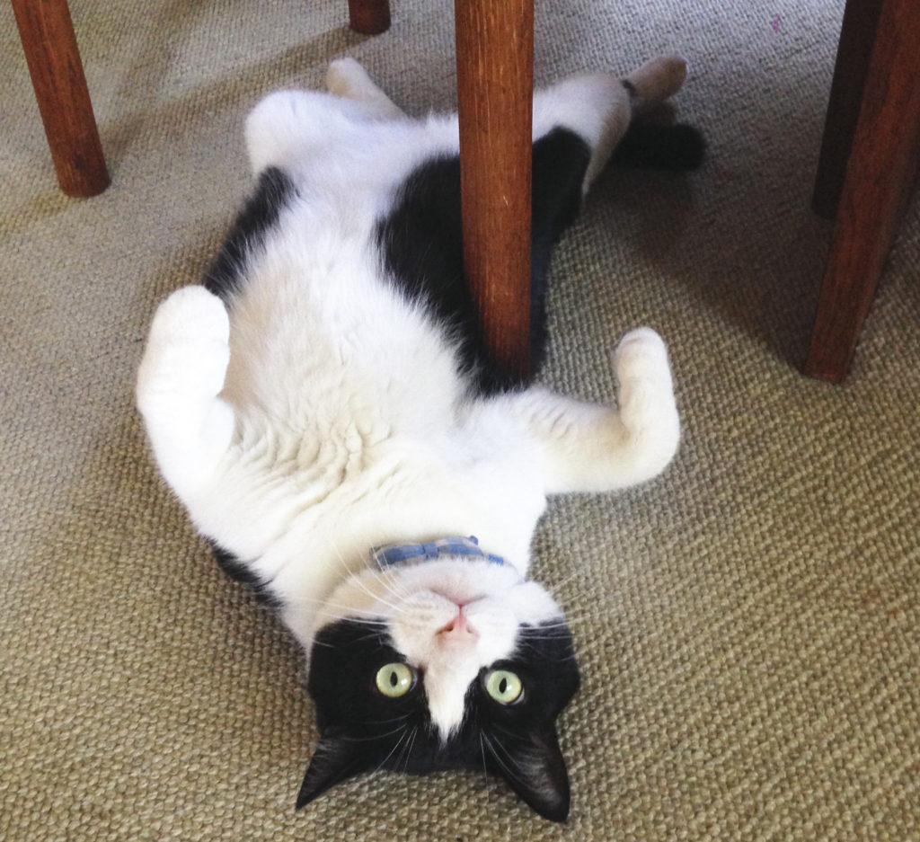 だらしない猫