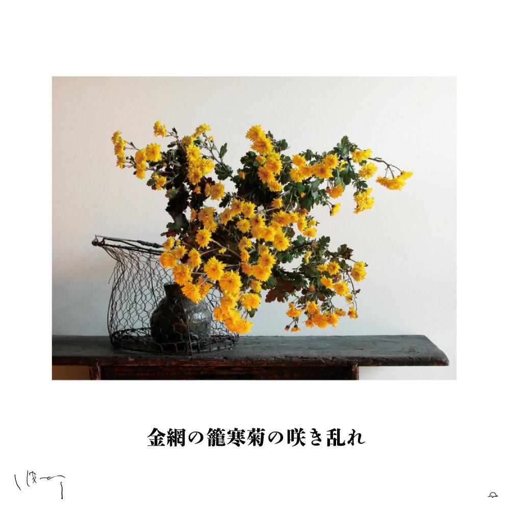 味岡伸太郎花頌抄 11月(寒菊)