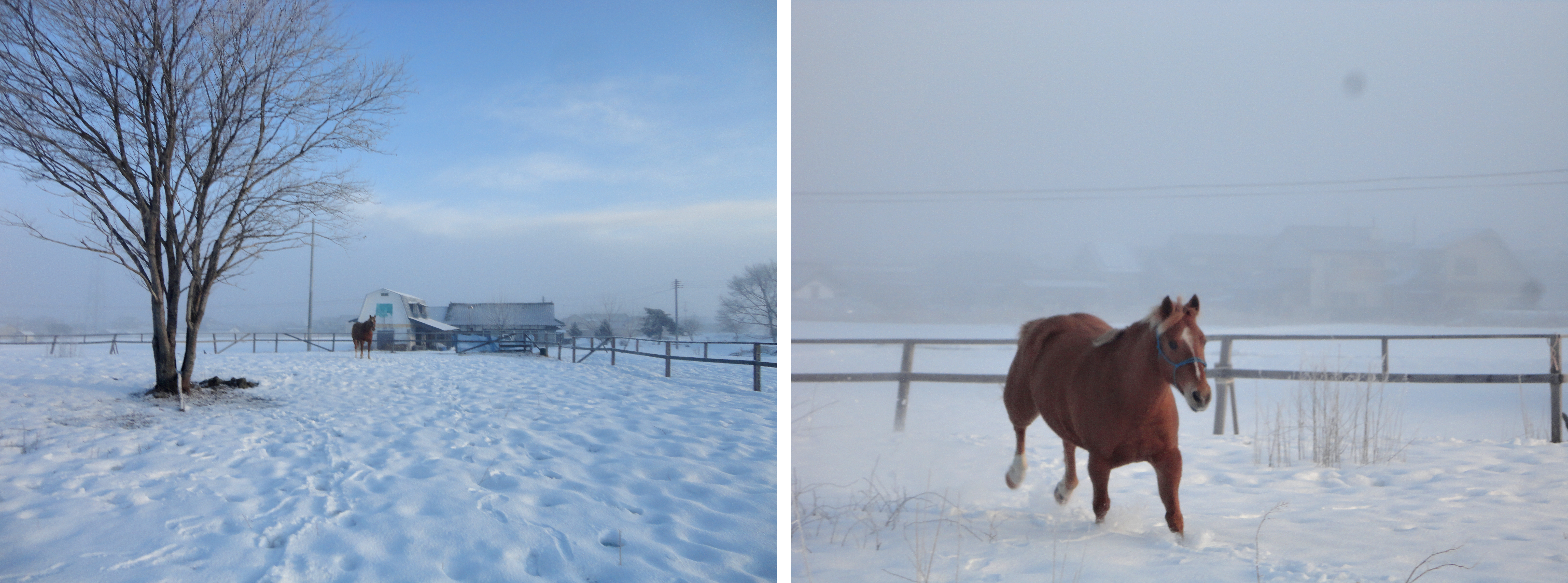雪原を駆ける馬