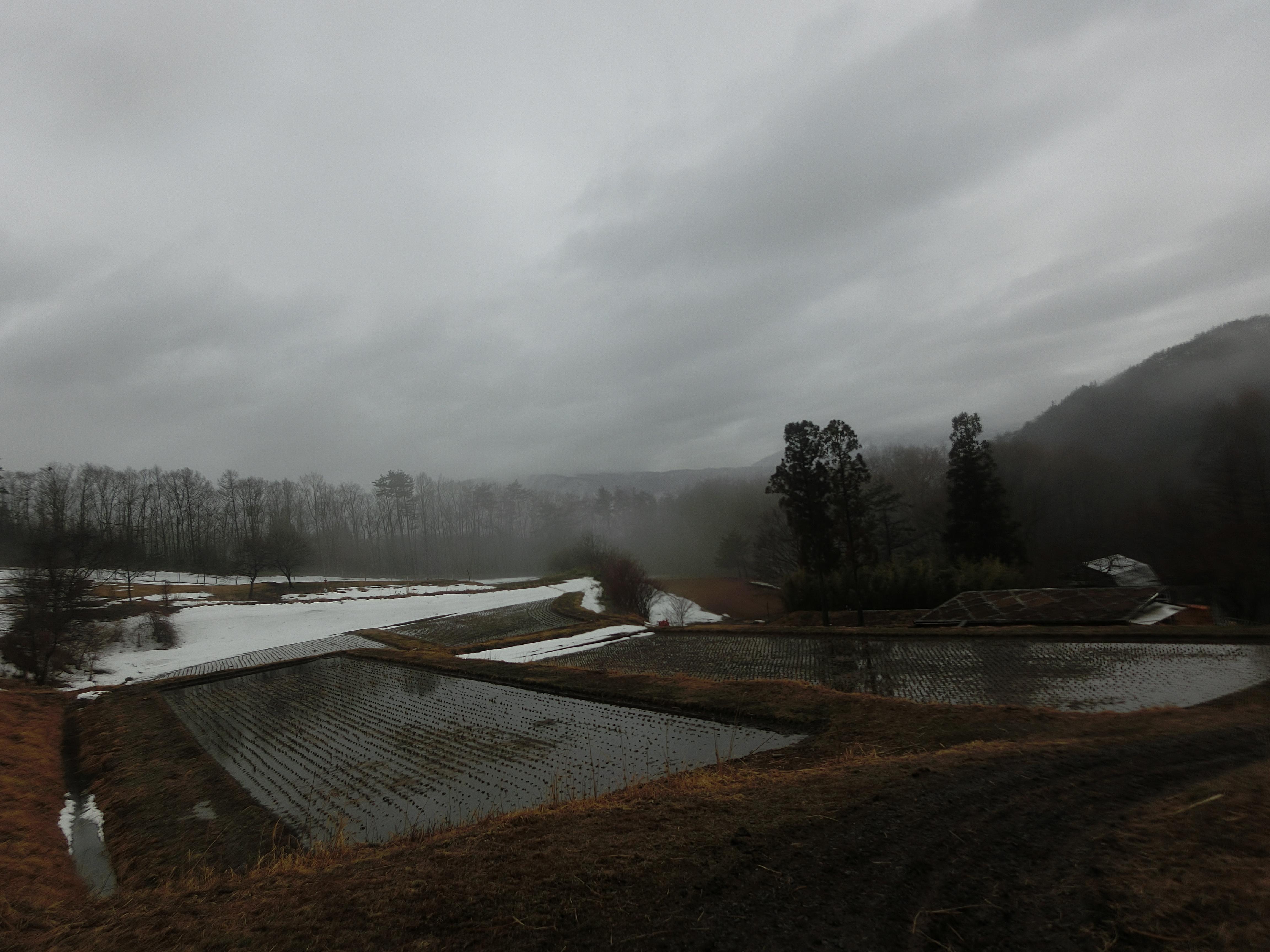 遠野の冬田