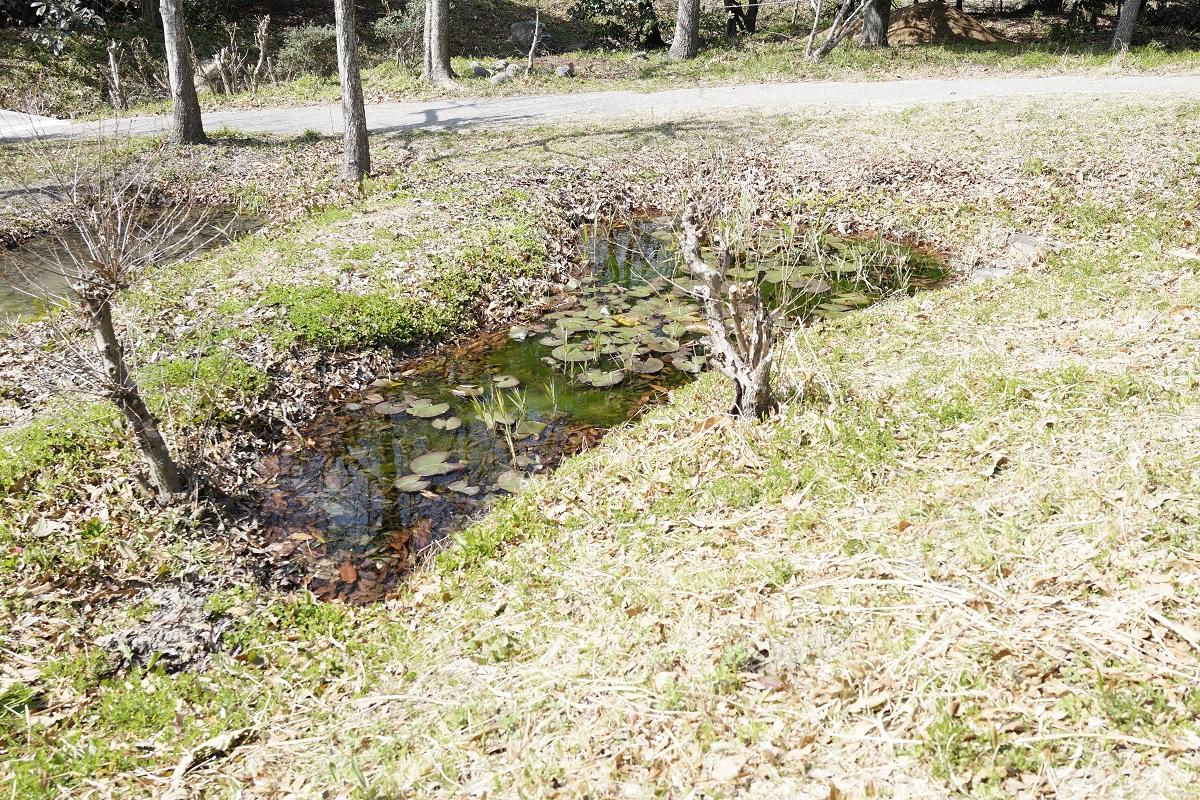 昆虫自然観察公園の池