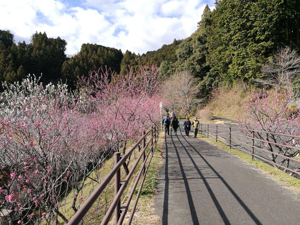 道の駅「花桃の里」夢のかけ橋