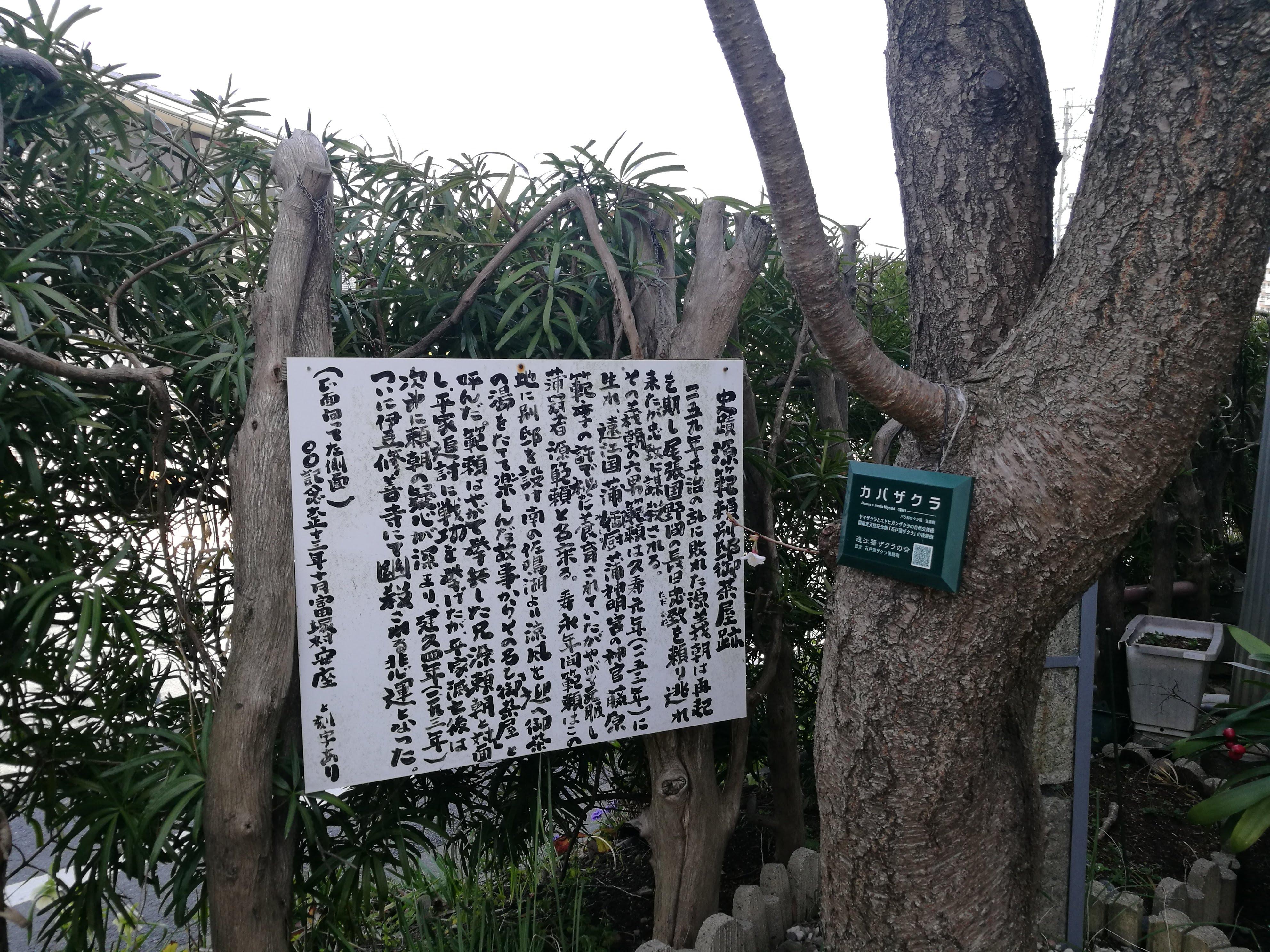源範頼別邸御茶屋跡の蒲桜