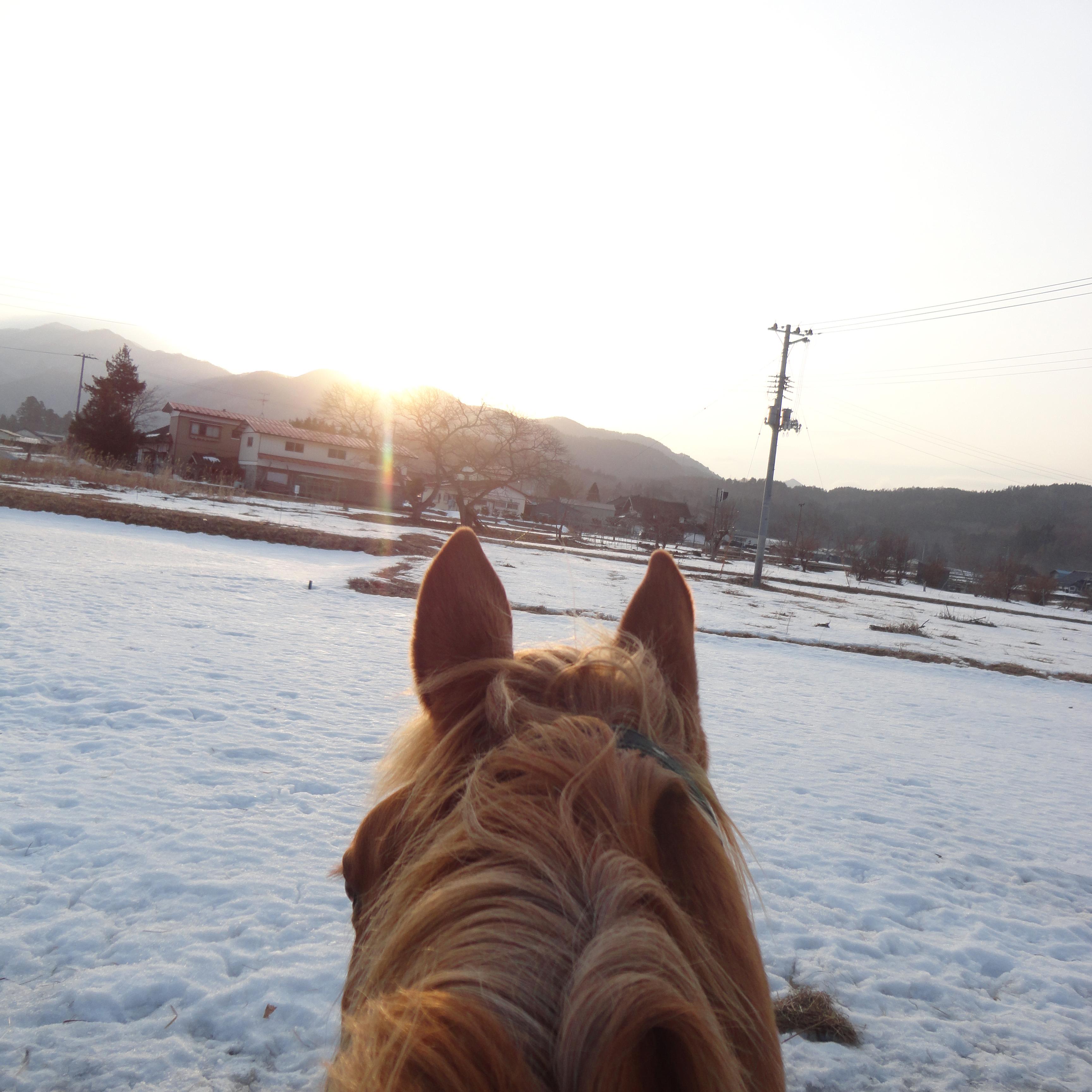 馬の背から冬の日を