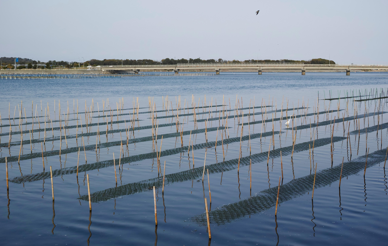 海苔網と白鷺