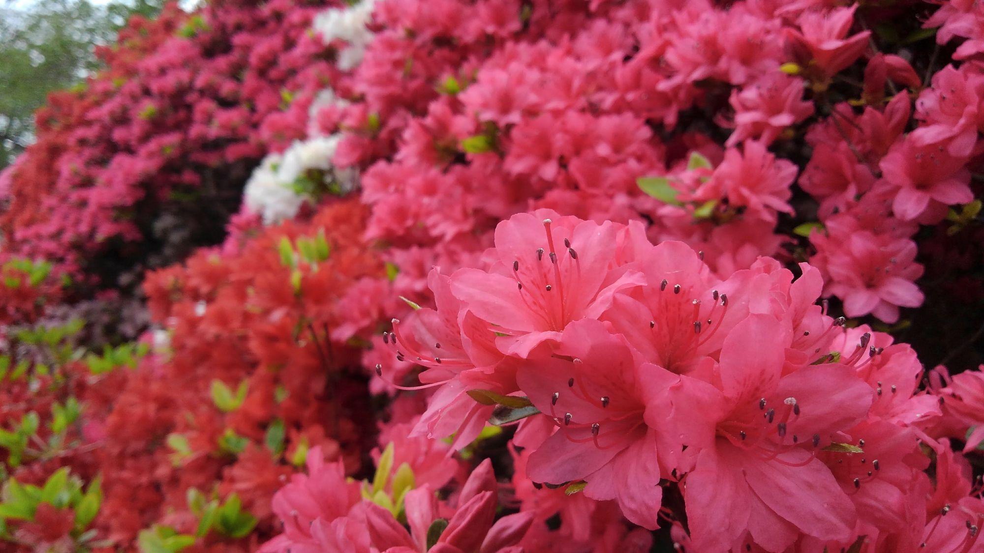 葉山町町役場花の木公園