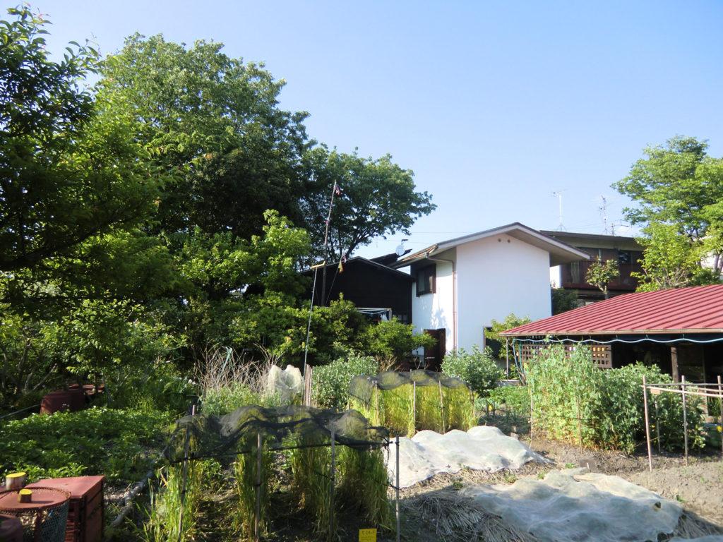 人生フルーツ/津端修一,英子高蔵寺ニュータウン近くの一角に建てた平屋