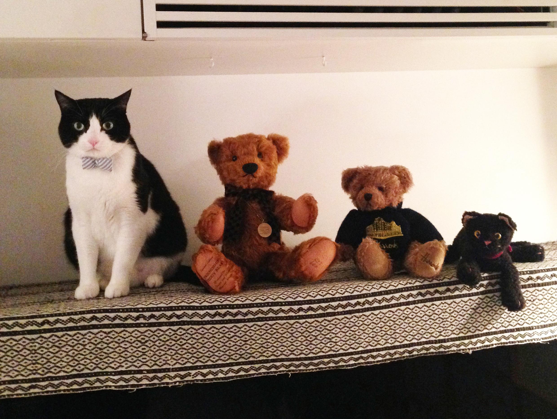 gato y oso