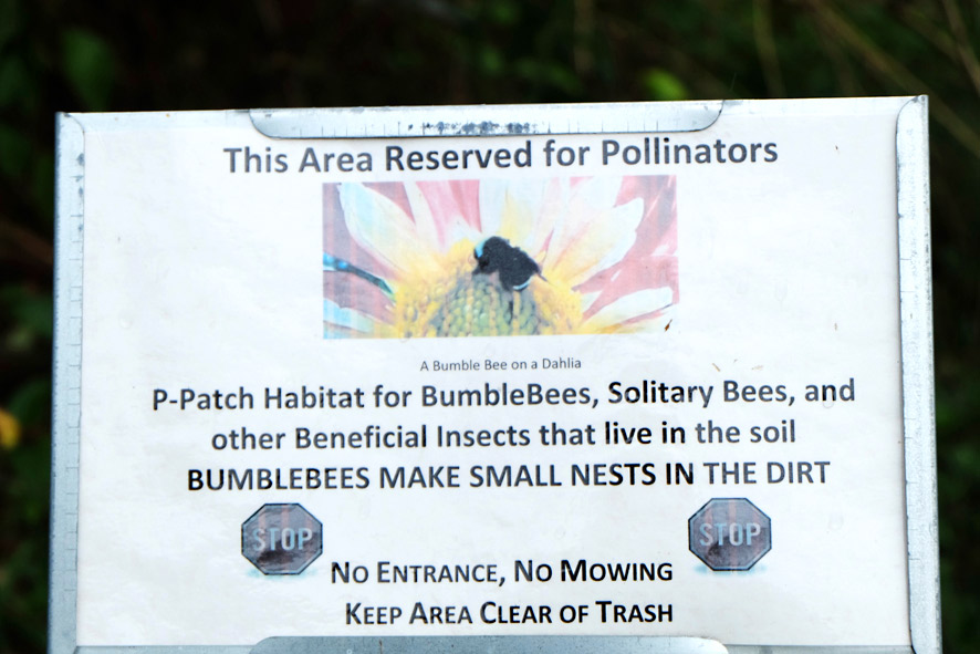 Picardo Farm P-Patch Pollinators garden