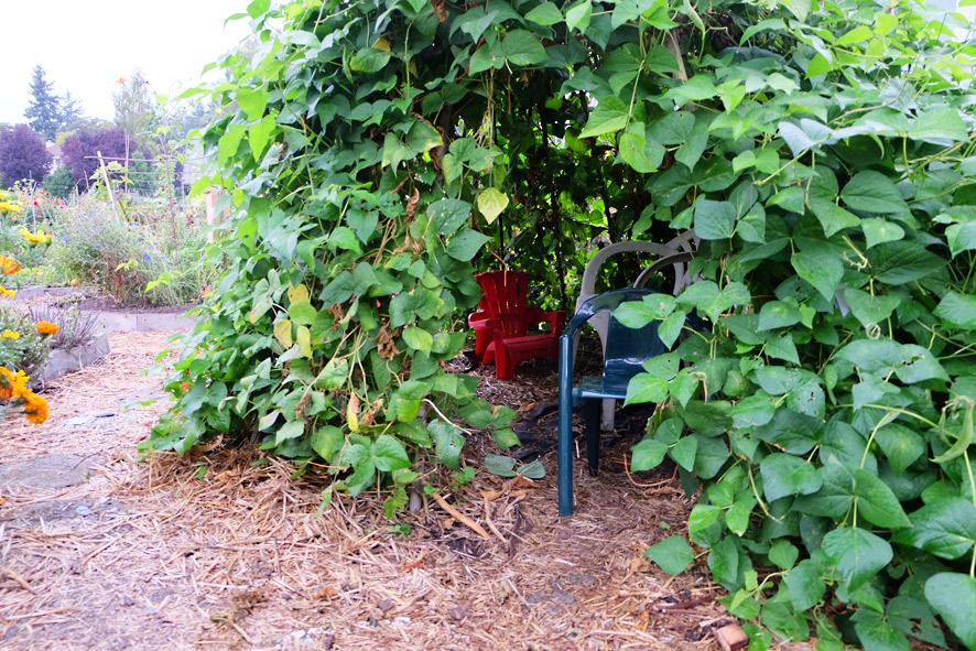 P-Patch Community Gardening; Seattle Department of Neighborhoods
