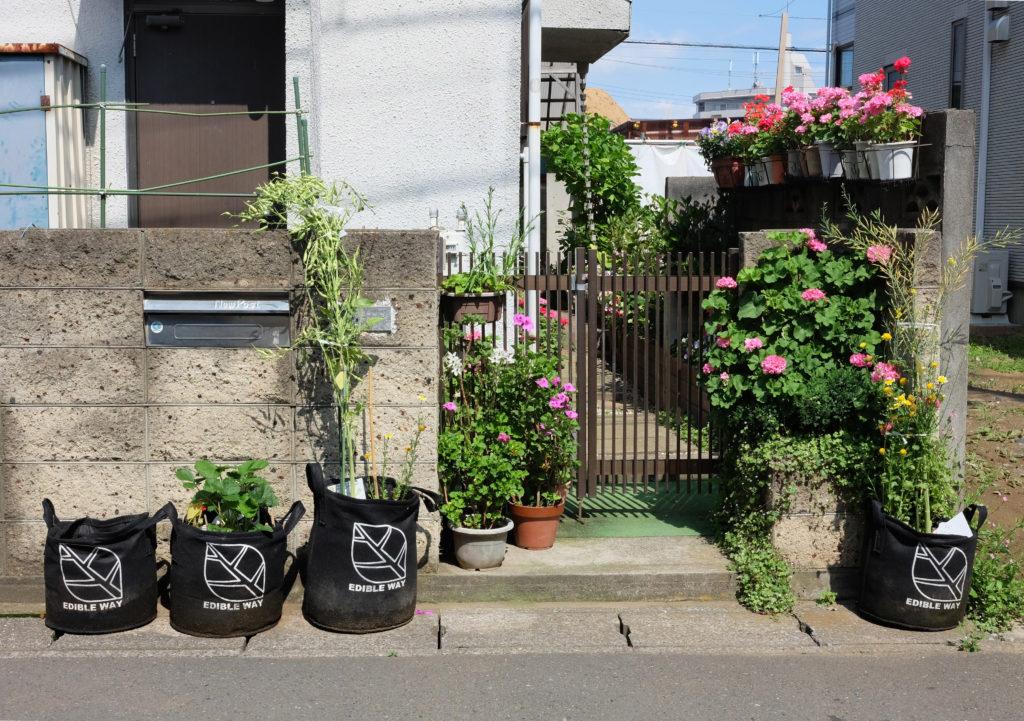 玄関前に咲いた花とエディブル・ランドスケープ