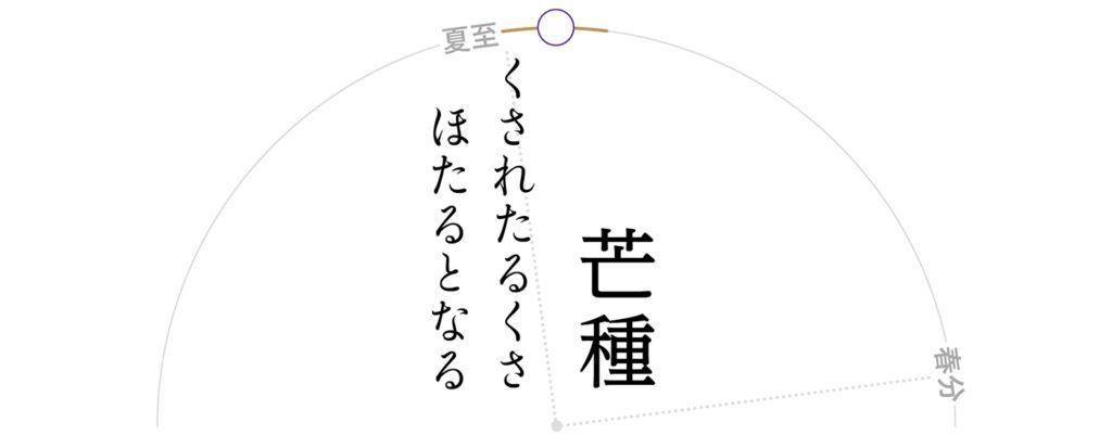 芒種-腐草為蛍