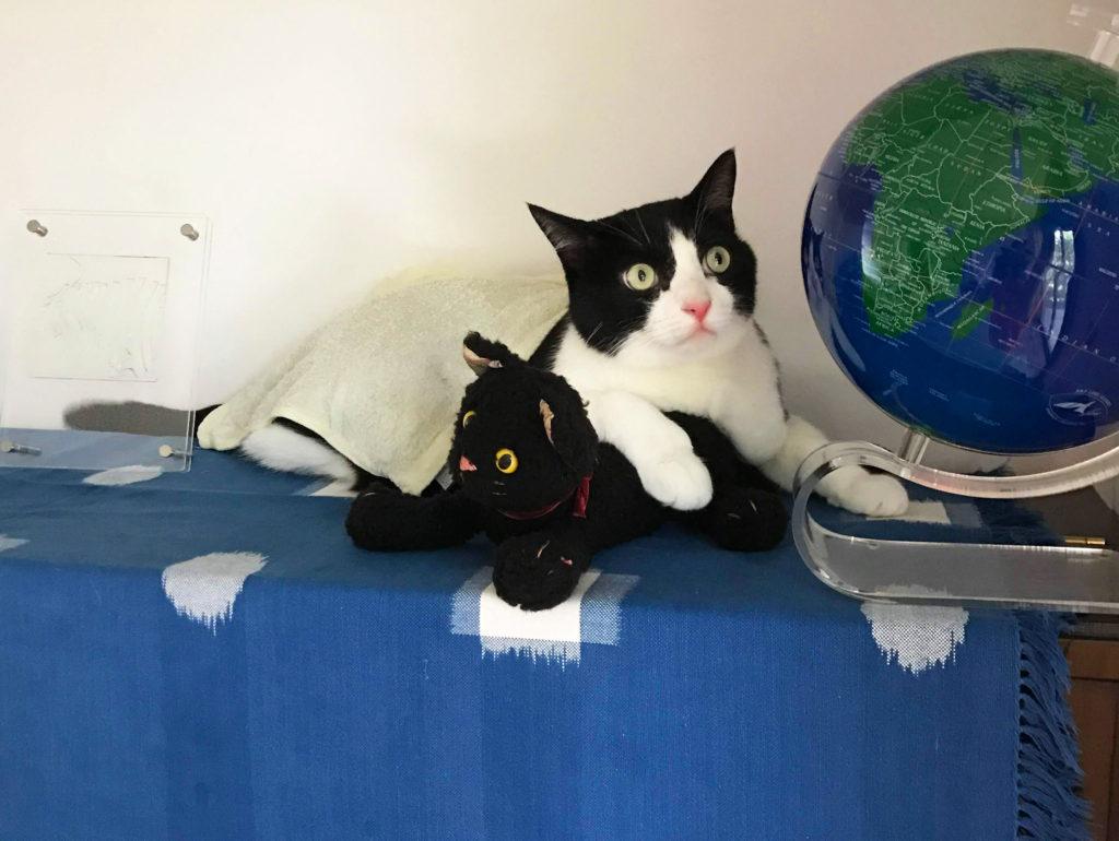 タオル猫と地球儀とぬいぐるみ