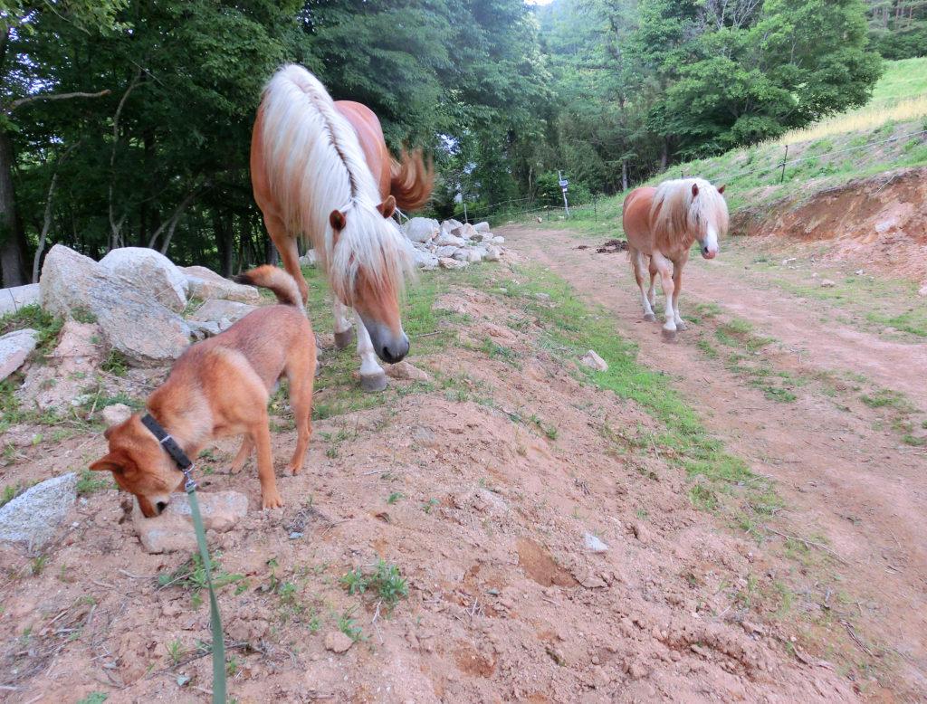 高原で犬と散歩する牡馬たち