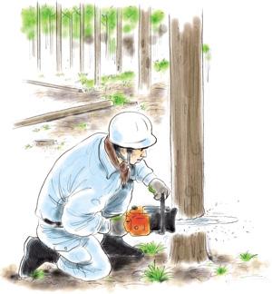 伐採される木
