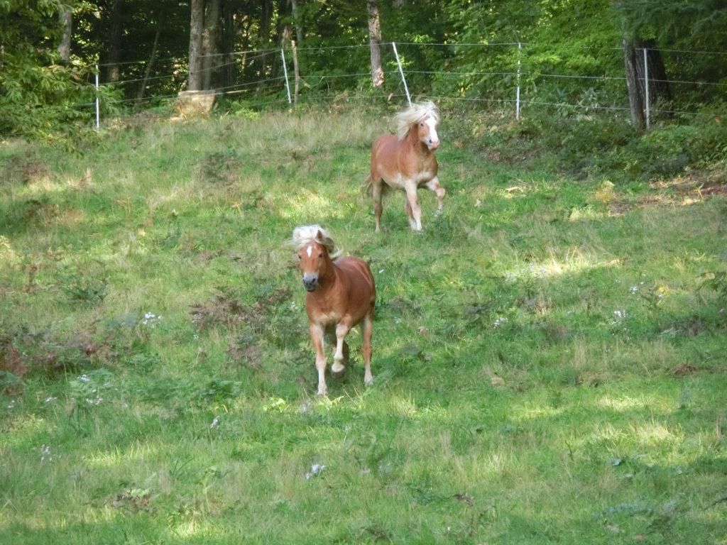 指笛を聞いて走ってくる馬たち