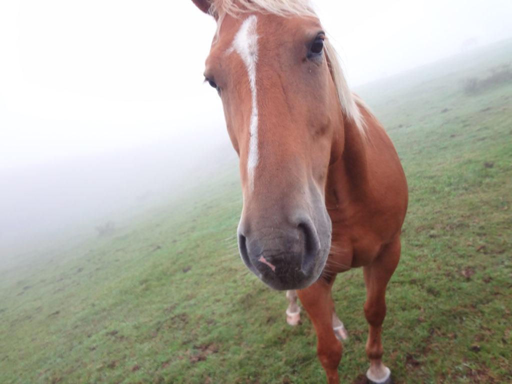 遠野郷八幡宮の流鏑馬経験のある馬のアップ