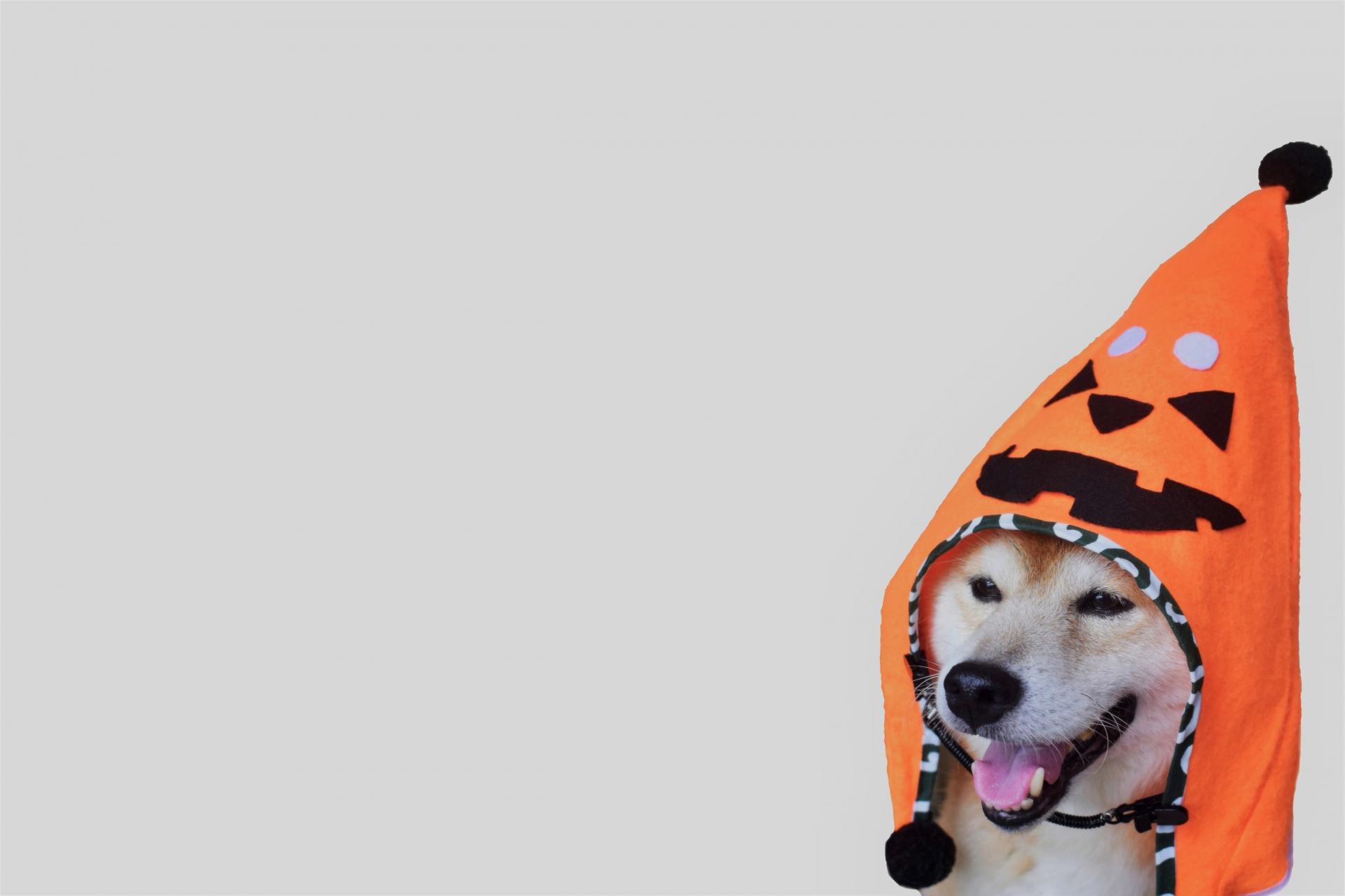 ハロウィン仮装犬
