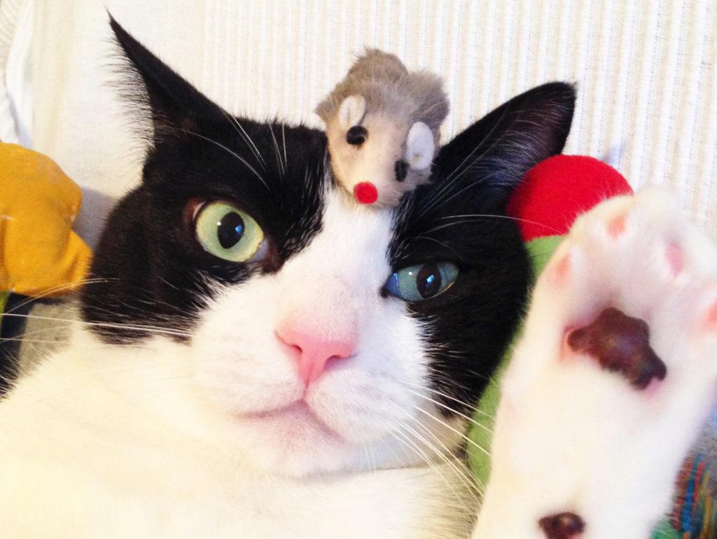 オードリー春日のモノマネをする猫