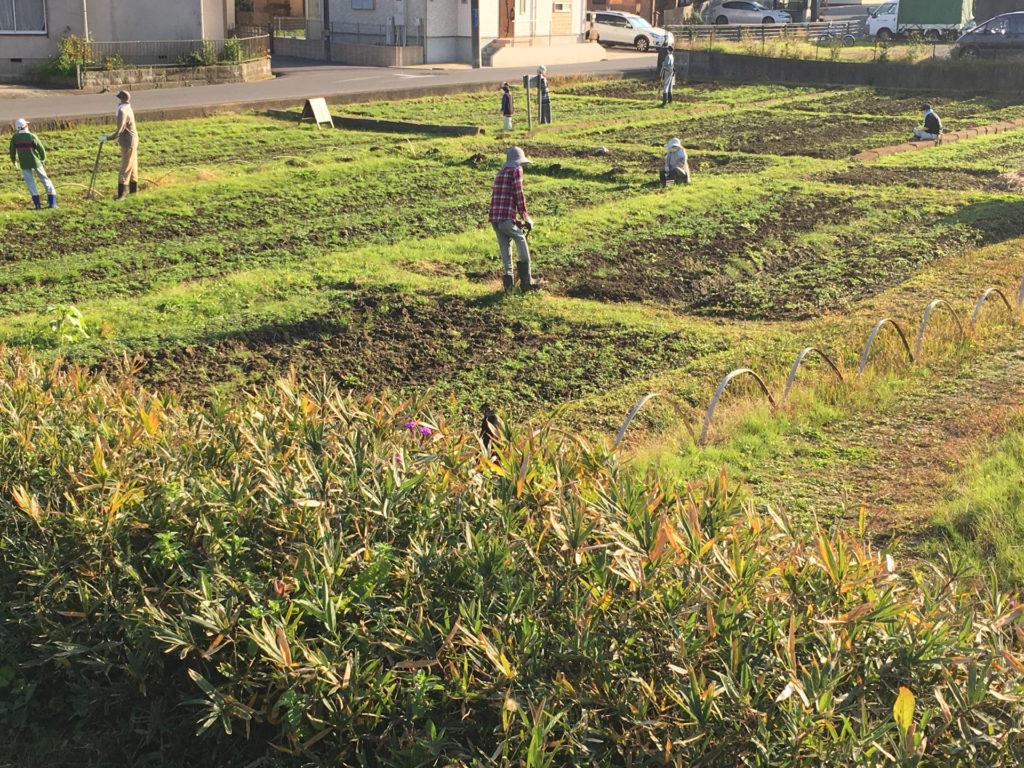 千葉県柏市カシニワの畑