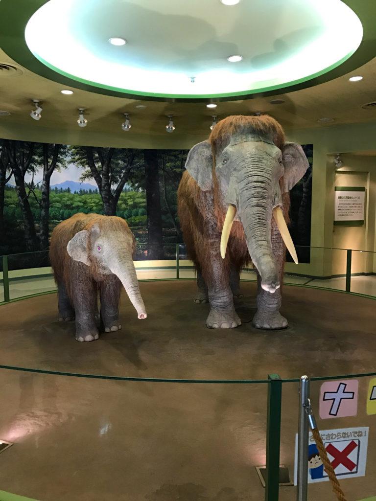 倉敷自然史博物館のマンモス