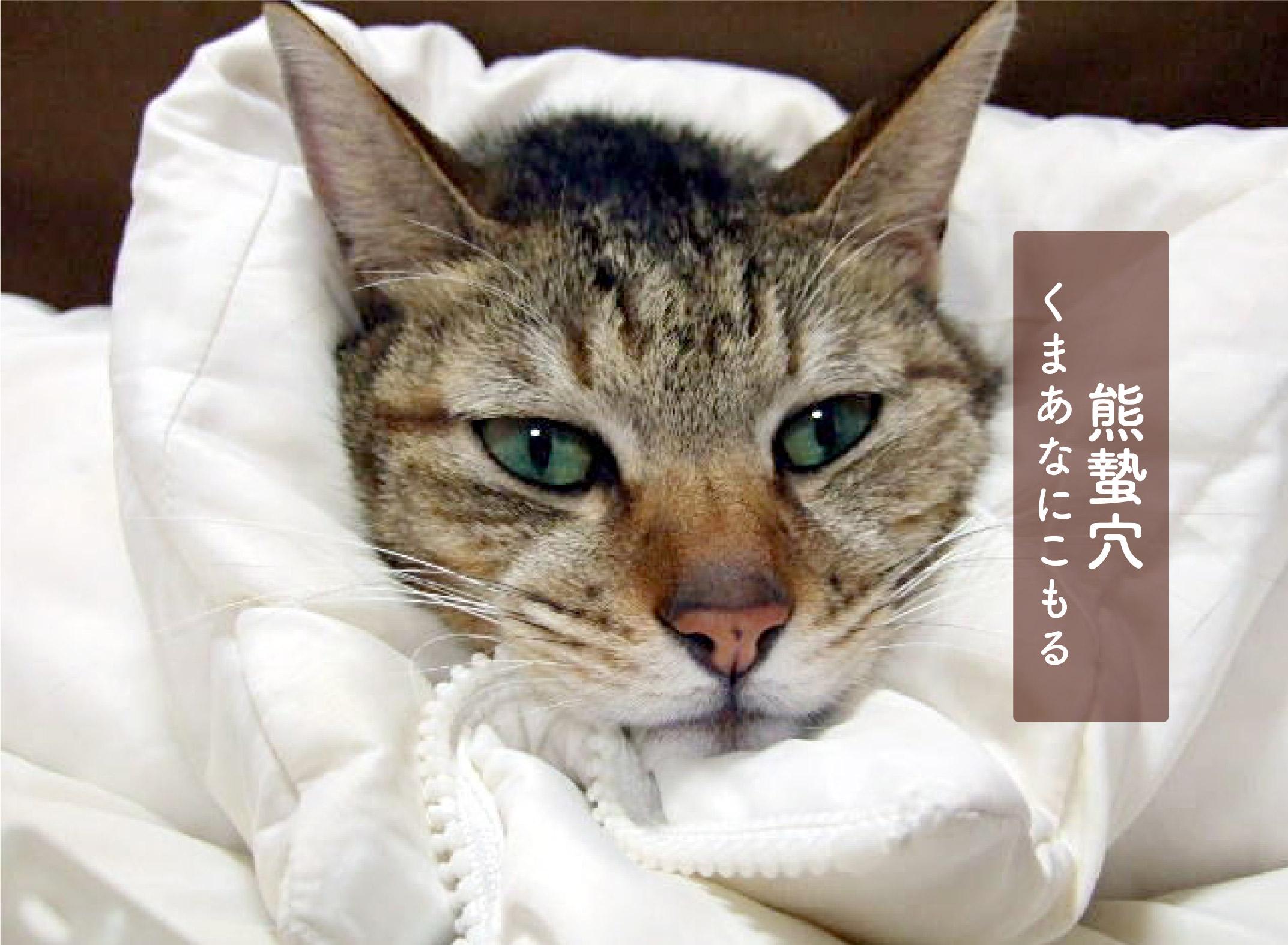 ダウンジャケットにくるまる猫