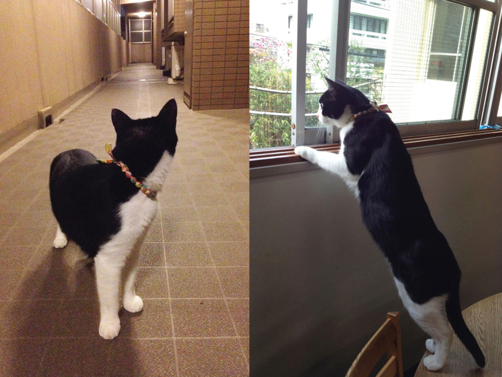 廊下をパトロール(ニャルソック)に励む猫