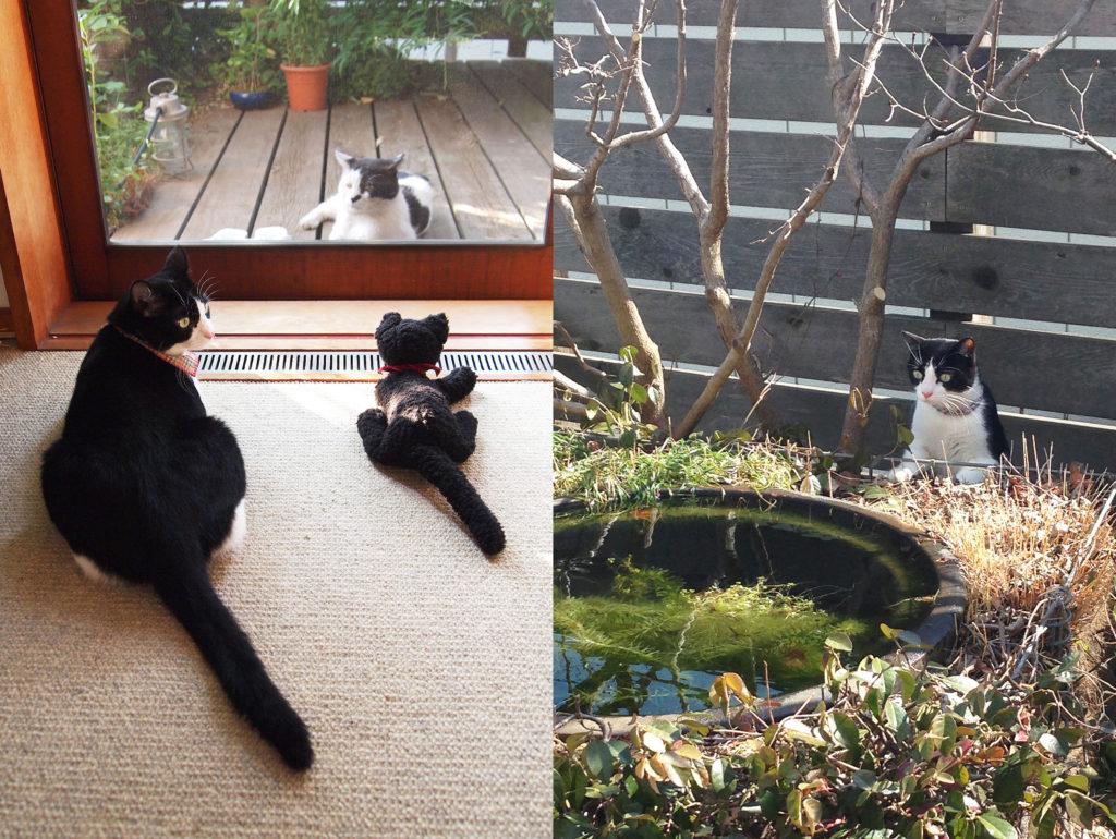 外猫に今日の報告をする家猫と猫のぬいぐるみと庭の池をパトロールする猫
