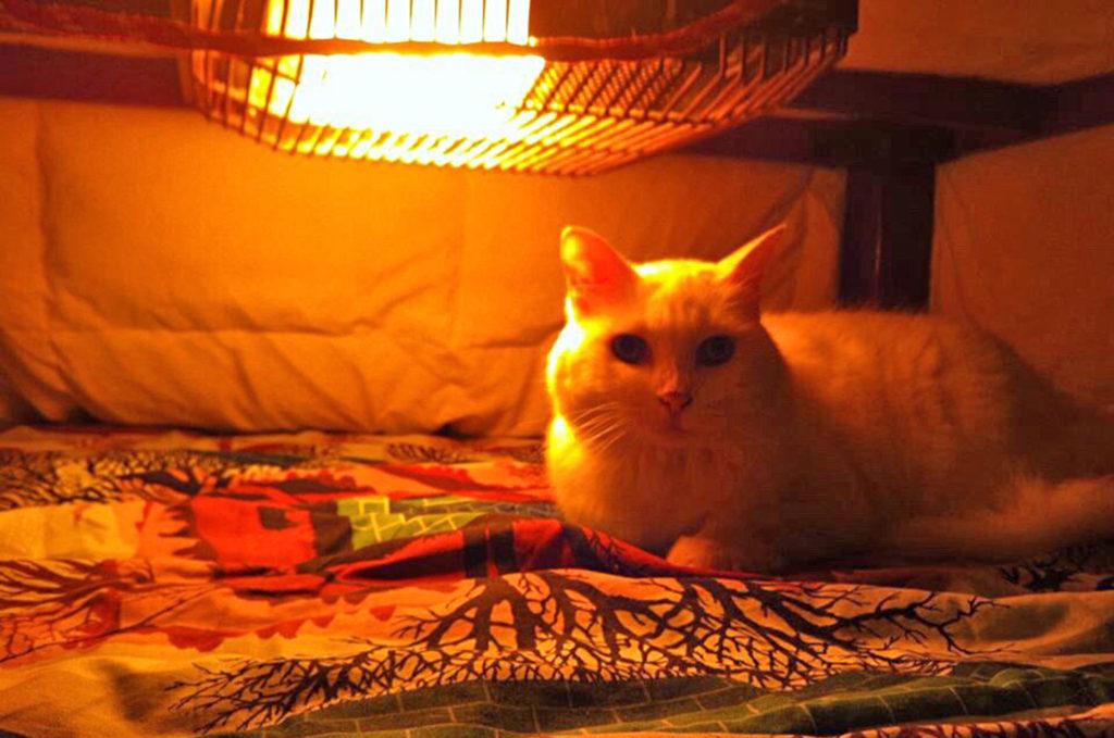 こたつで暖まる猫