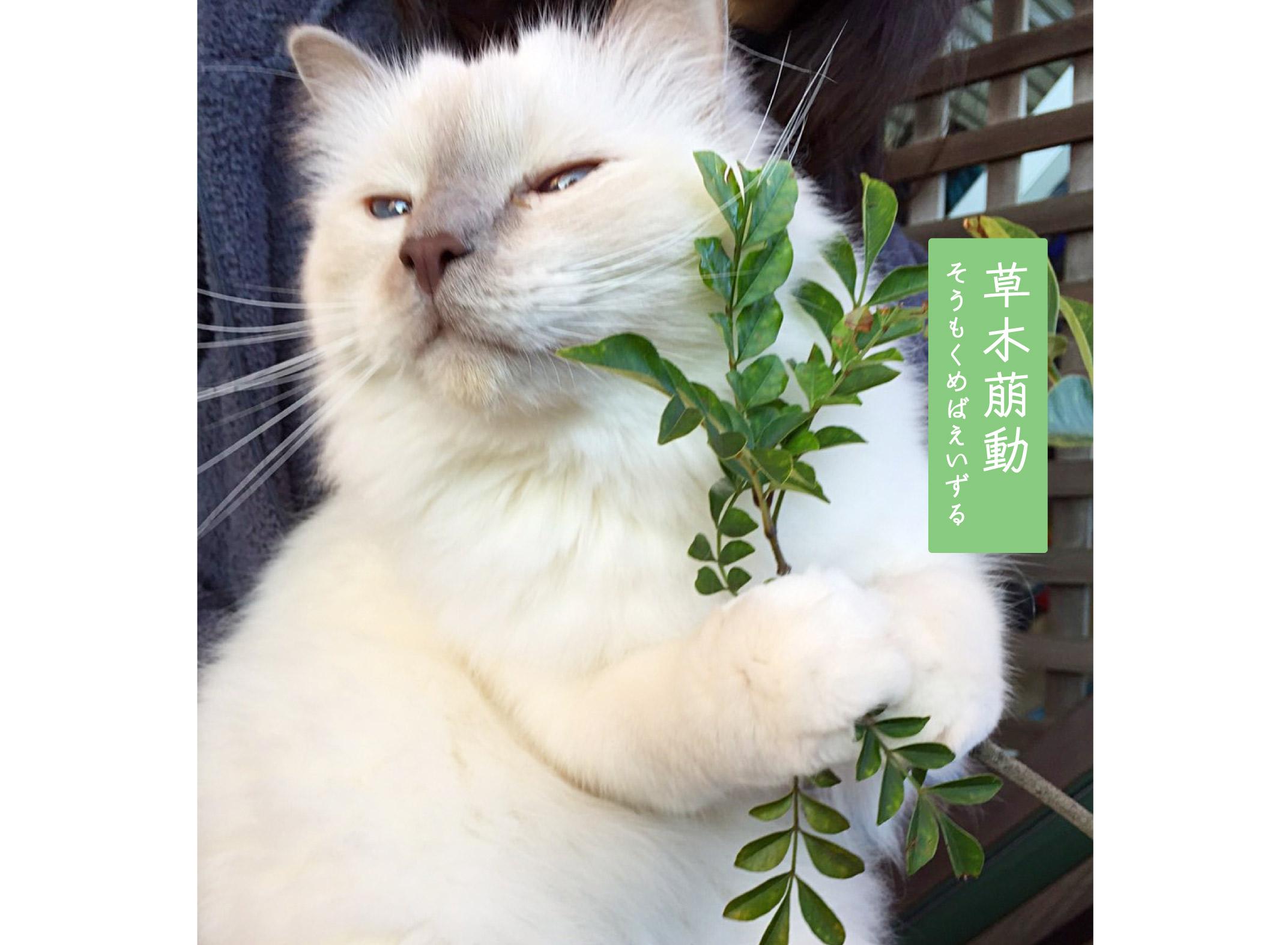 猫と草木萠動