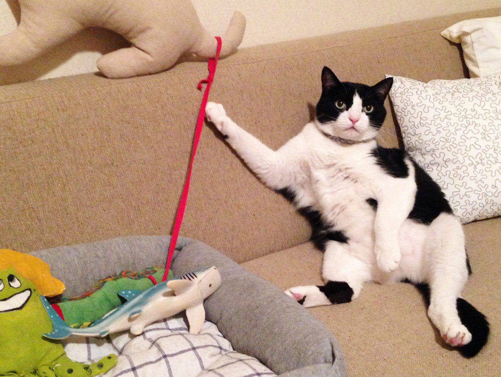 飼い主に猫とは何か教えている猫歌丸