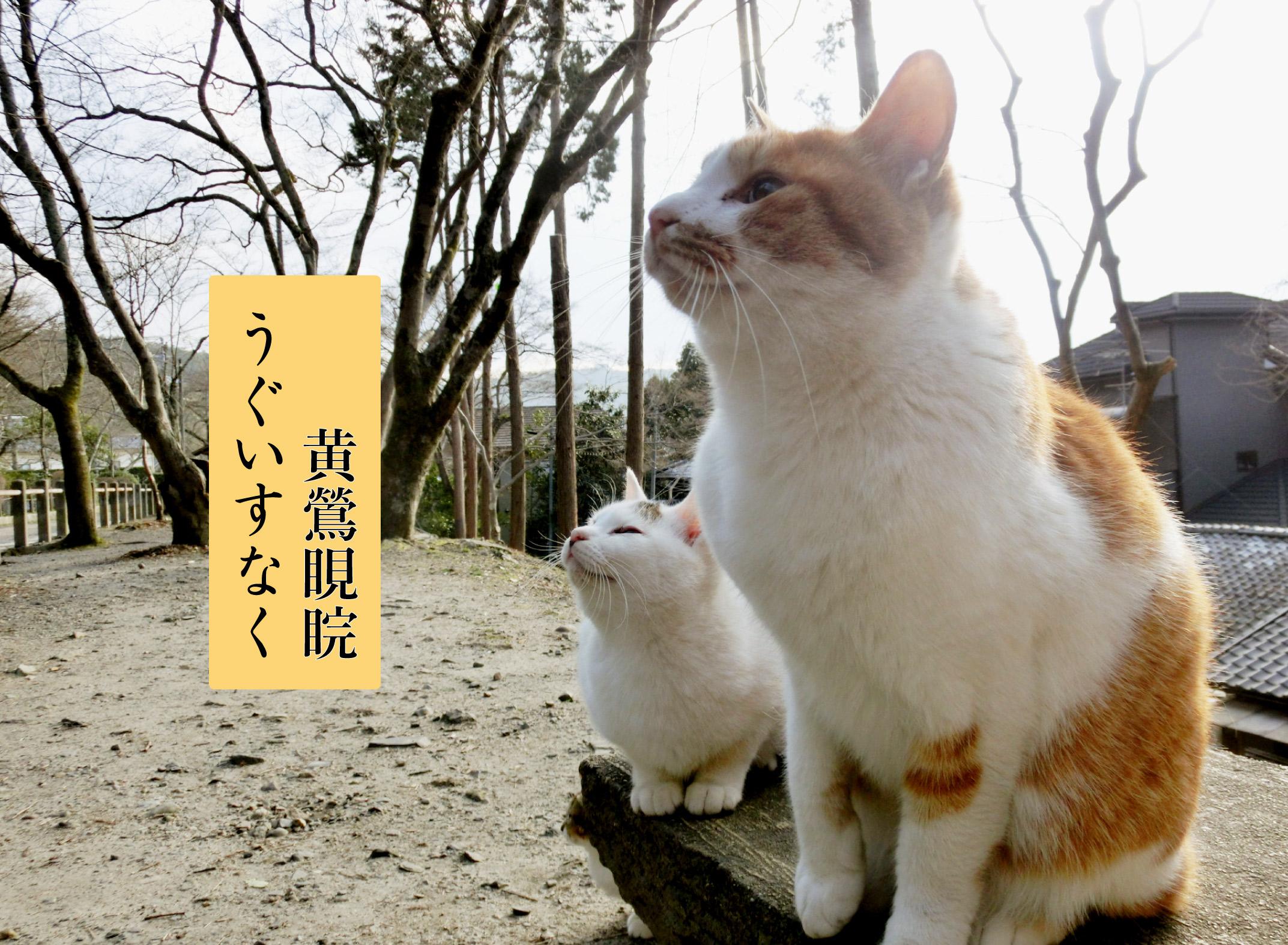 猫と黄鶯睍睆