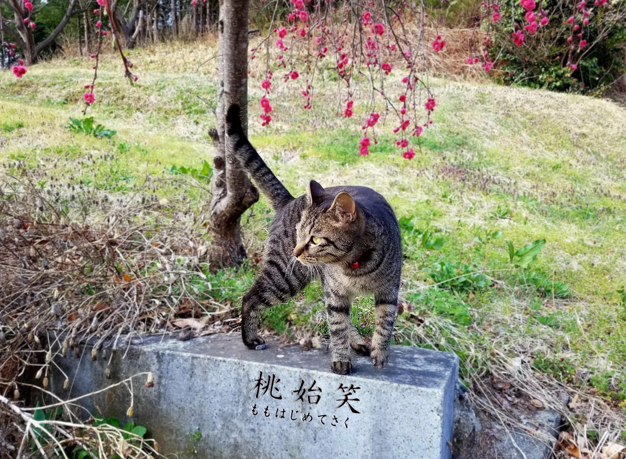 猫と桃の花