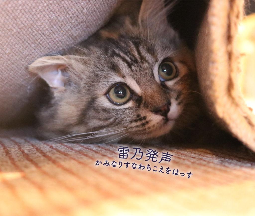 猫と雷乃発声
