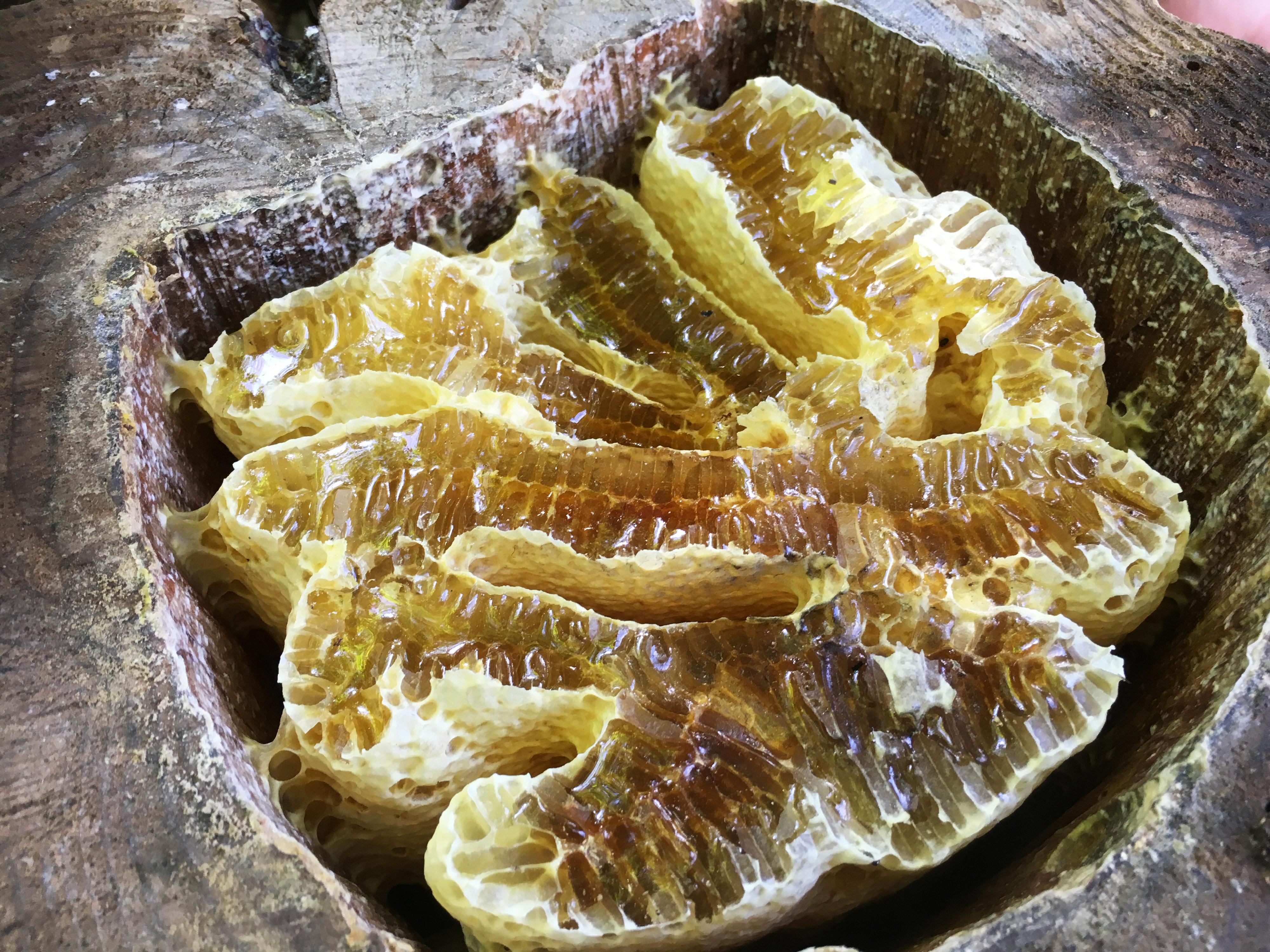 日本ミツバチの巣蜜