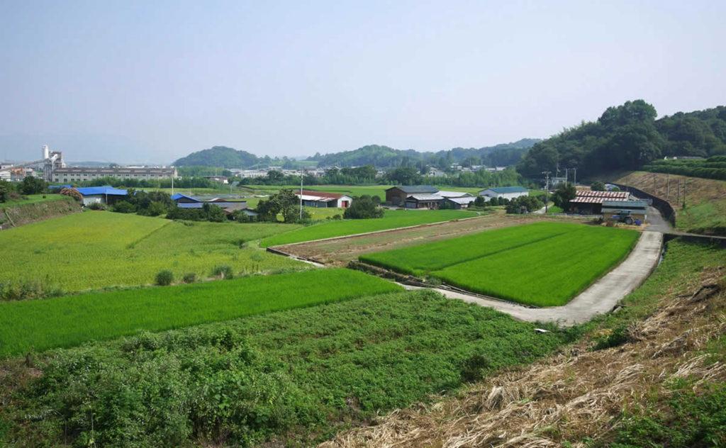 田んぼが広がる観音寺農地