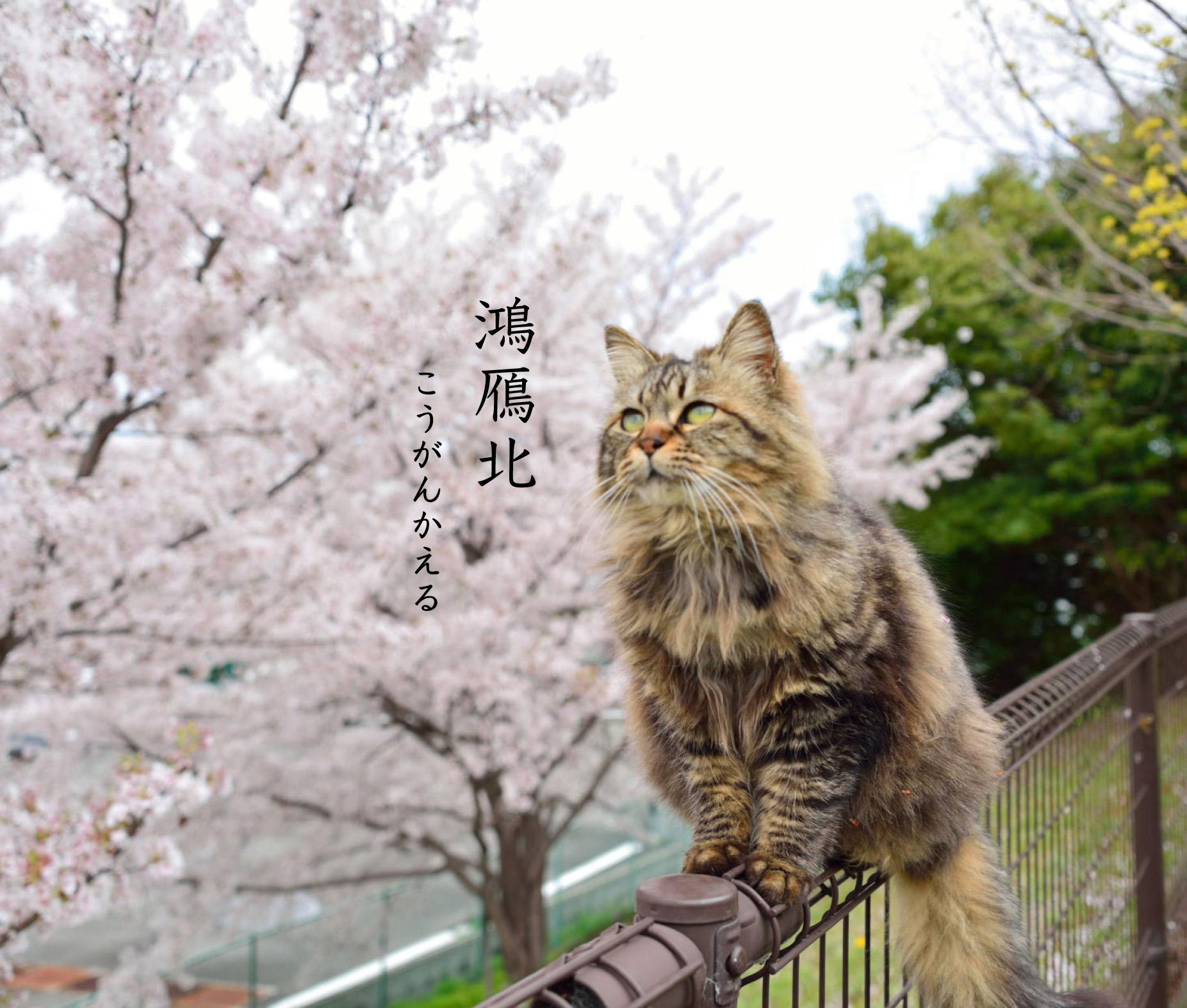 猫と鴻鴈北