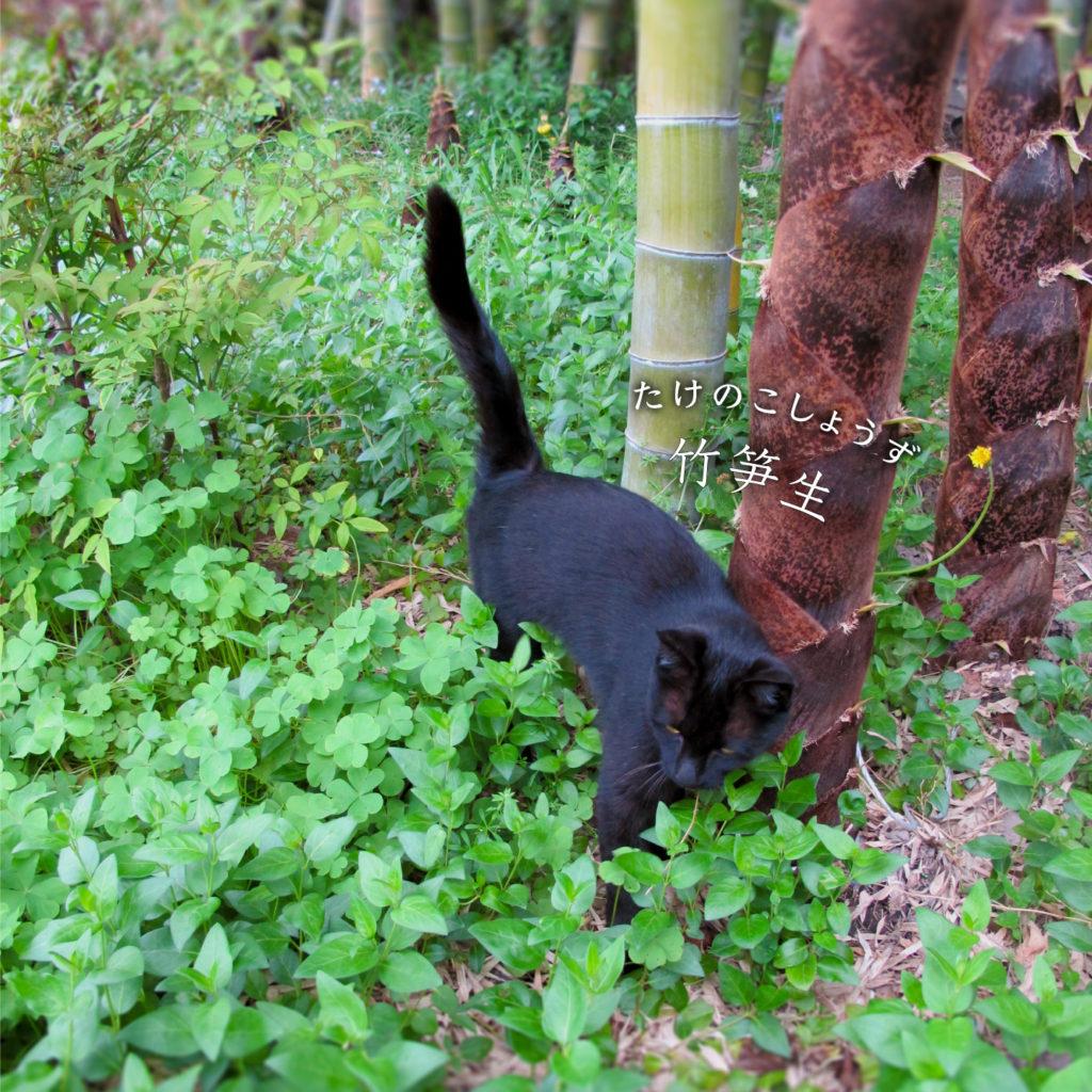 猫と竹笋生