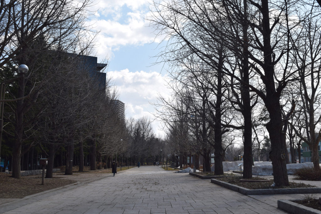 札幌中島公園の並木道