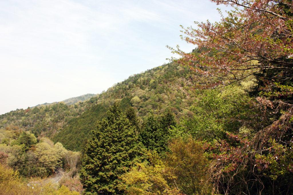 豊稔池ダム周りの風景