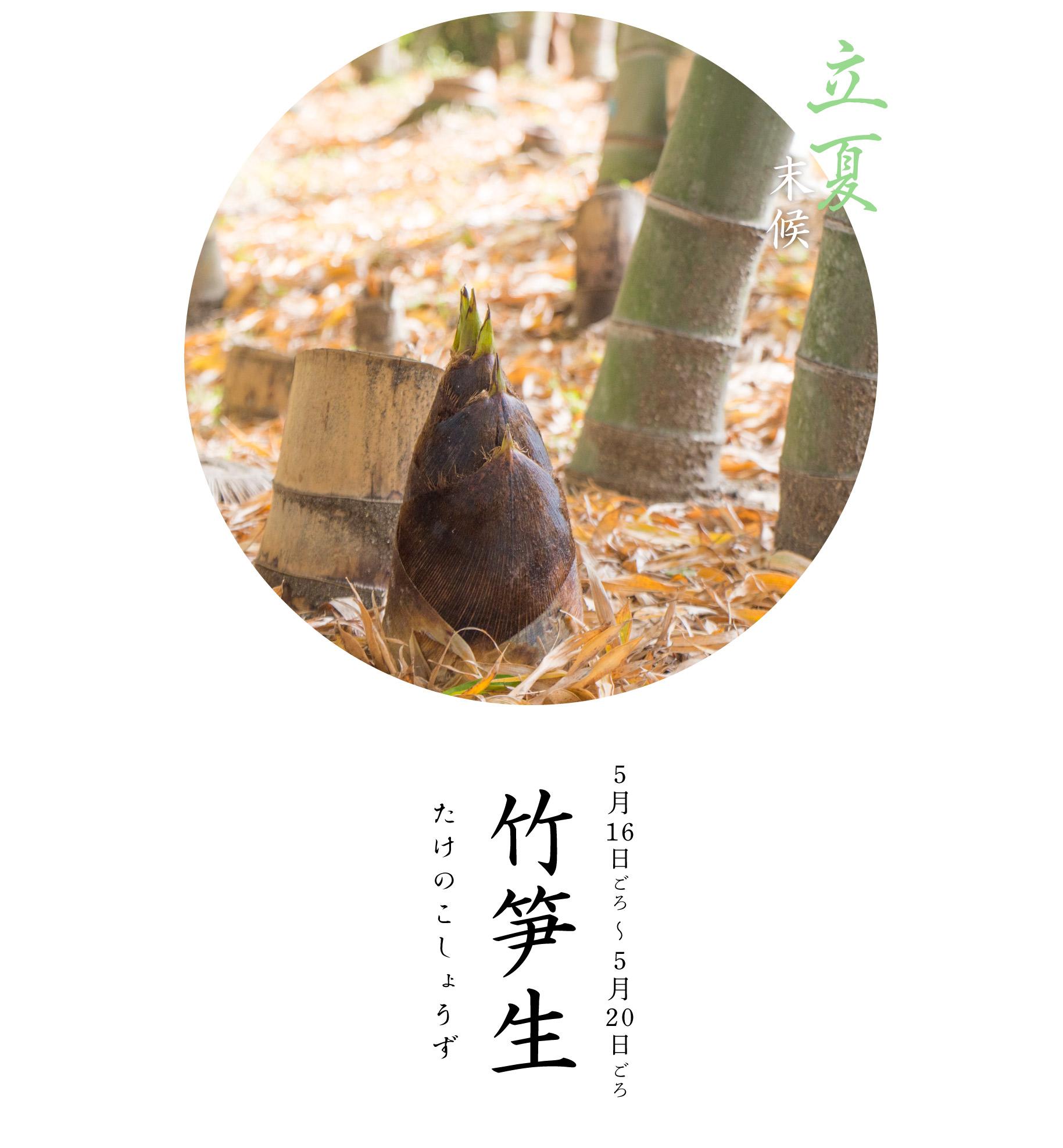 時期 竹の子