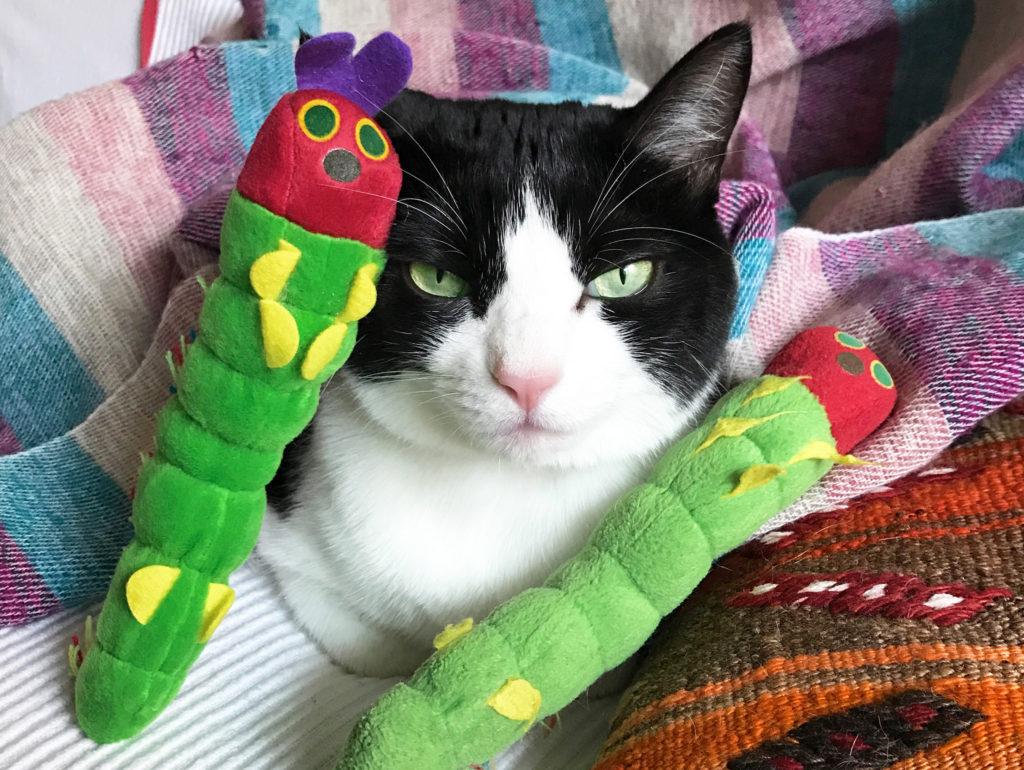 おもちゃのキャタピラに囲まれてドヤ顔のハチワレ猫